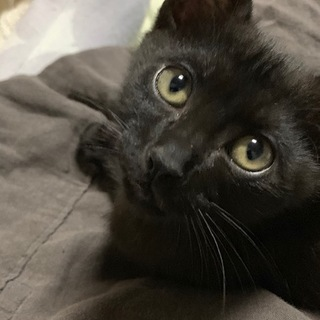 短毛の黒猫くん