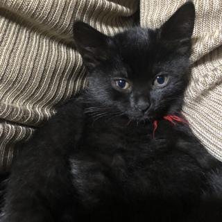 【メス】黒猫 トイレしつけ◎