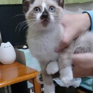 生後約2ヶ月の子猫です