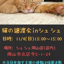 猫さんの譲渡会 in シュシュ岡山店