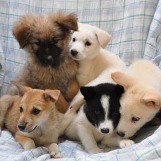 コロコロ子犬2〜3ヶ月(譲渡会あり)②