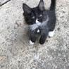 長野県 5匹の子猫が産まれました!第三子