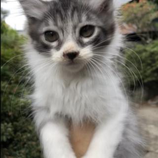 長野県 5匹の子猫が産まれました!第四子