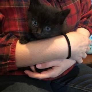 可愛い4兄妹、黒猫、ハチワレ、サビ