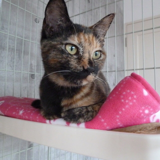 サビ猫好きな方、お待ちしています♪