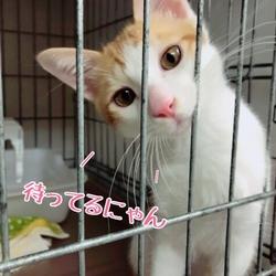 保護猫の譲渡会❤️久米川みどり動物病院 サムネイル2