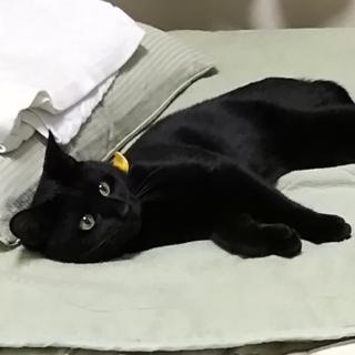まるで犬!超フレンドリーで人が大好きな黒猫!