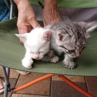 子猫の里親さん探しています‼️
