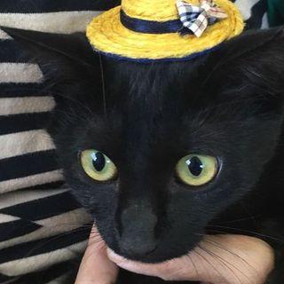 10/27キャットソシオン黒猫の譲渡会にでます!