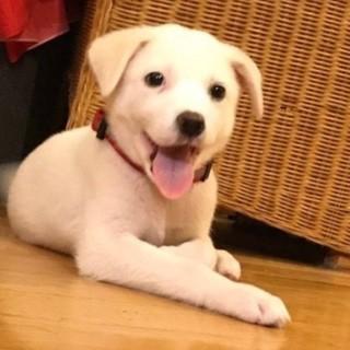 2ヶ月ぐらいの子犬!好奇心旺盛で元気なおとうふくん