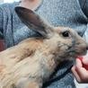 急募!茶色ウサギちゃんの里親さま サムネイル3