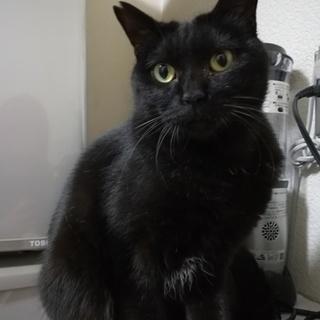 ご飯大好き!元野良母のマイペース黒猫です♪