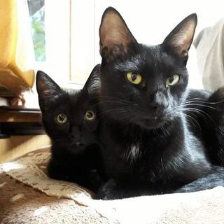黒猫母と黒猫息子くん