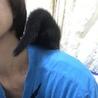 フワモコ  兄妹 黒 キジ  サムネイル5
