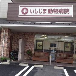 猫の譲渡会@いしじま動物病院待合室