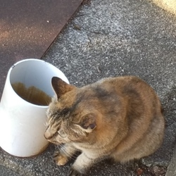 サクラ猫発見