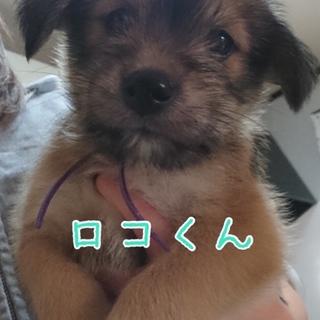 ロコ 君 ★ 2カ月