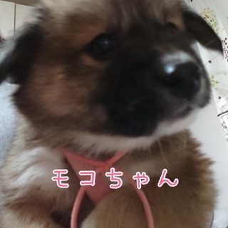 モコちゃん ♡ 2カ月