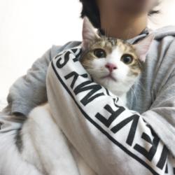 ▼猫の譲渡会▼名古屋市港区 サムネイル1
