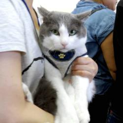▼猫の譲渡会▼名古屋市西区