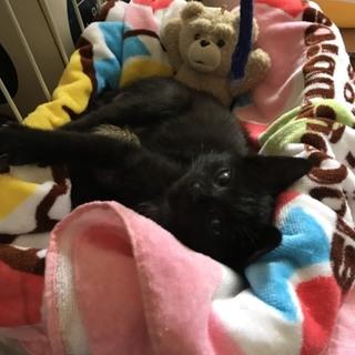 生後1カ月甘えん坊子猫さん里親募集お願いします!