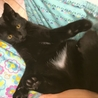 社交的で落ち着いた子猫パプリカ君。 サムネイル6