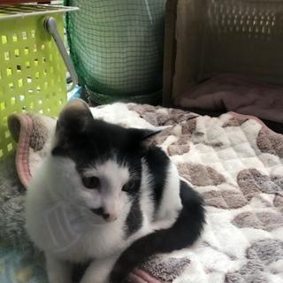 チョビ髭の元気兄弟子猫です