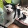 チョビ髭の元気兄弟子猫です サムネイル3