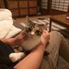 うちの猫(メインクーン)が五匹子供を産みました。