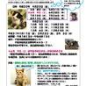子猫&成猫の譲渡会