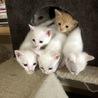 生後2ヶ月子猫里親探し中!4匹