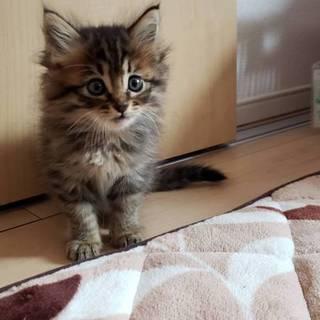 激かわ!!子猫!(雑種です。)