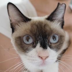 *子猫〜大人猫のネコ譲渡会*