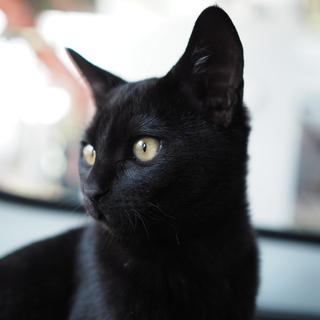 ◎スミ◎元気いっぱいつやつや黒猫