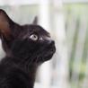 ◎スミ◎元気いっぱいつやつや黒猫 サムネイル2