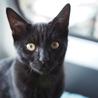 ◎スミ◎元気いっぱいつやつや黒猫 サムネイル3
