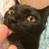 社交的で落ち着いた子猫パプリカ君。 サムネイル2