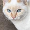 ※お見合い中につき一旦停止。かわいい子猫