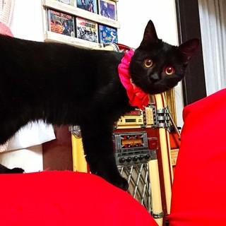 障害のせいで捨てられてしまった黒猫ちゃん