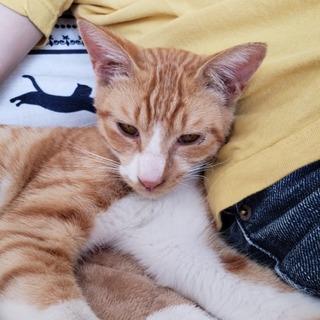 人馴れしてて、甘えん坊な元気な子猫です。