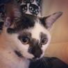 約7ヶ月 かぶき美猫 ☆ひめちゃん☆ サムネイル2