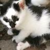 約7ヶ月 かぶき美猫 ☆ひめちゃん☆ サムネイル4