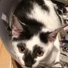 約7ヶ月 かぶき美猫 ☆ひめちゃん☆ サムネイル6