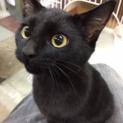 可愛い黒猫 名古屋から