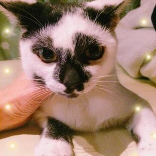 約6ヶ月 かぶき美猫 ☆ひめちゃん☆