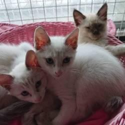 尼崎の保護猫2期生募集開始