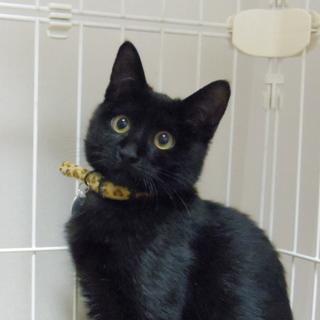 とっても優しく温和な黒猫さんです!