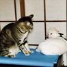 葵ちゃん♡あんちゃんちっとも優しくないーマルコちょっと破いただけなのに怒られた!