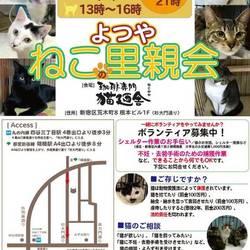 11月24日(土) 地域猫から社会猫へ FIPフリー 四谷猫廼舎 里親会(ボランティア募集中)