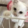 白猫ちび君【交渉中】